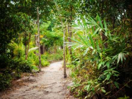 Jungle Trail op Koh Rong