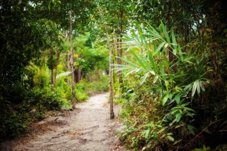 Jungle Trail on Koh Rong