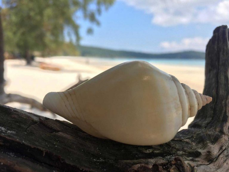 A-Shell-on-Saracen-Bay-Koh-Rong-Samloem