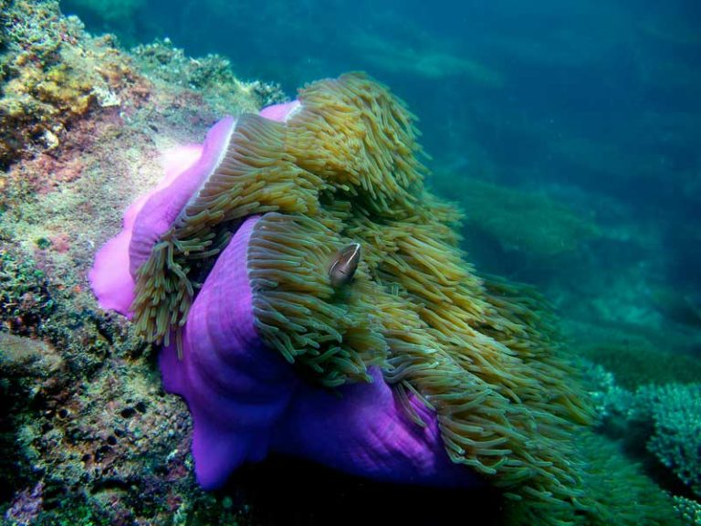 Marine Life on Koh Rong Island in Cambodia