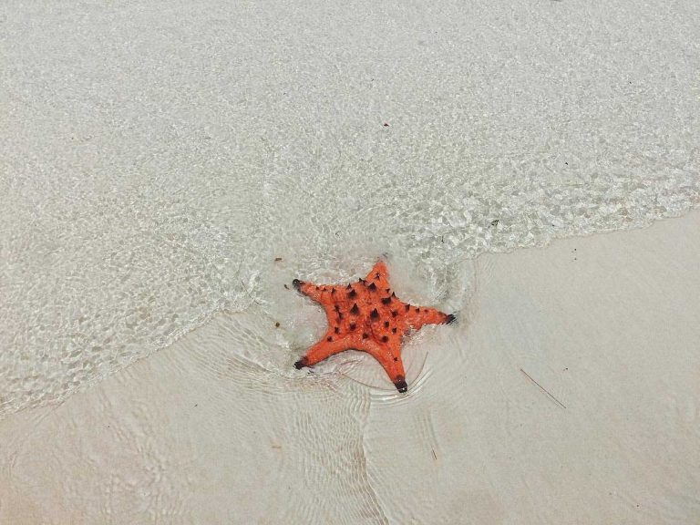 Star Fish on Koh Rong Island in Cambodia